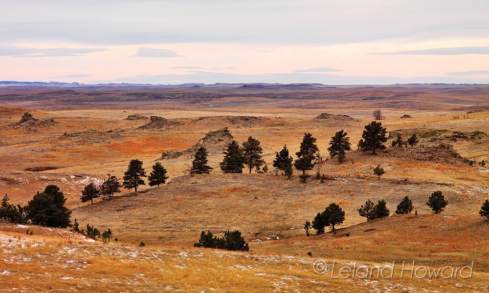 Eastern Montana grasslands